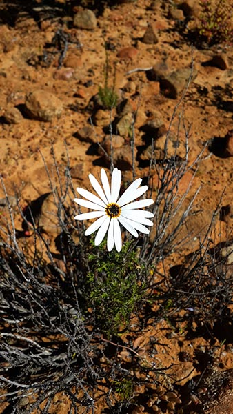 gatsrivier-flora-16