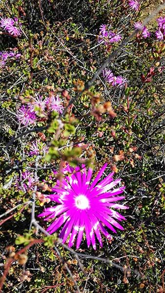 gatsrivier-flora-20