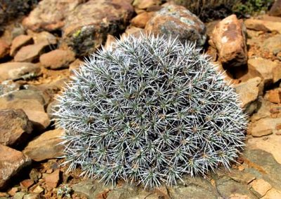 gatsrivier-flora-31