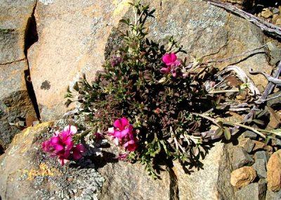 gatsrivier-flora-34