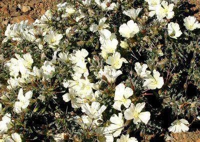 gatsrivier-flora-39