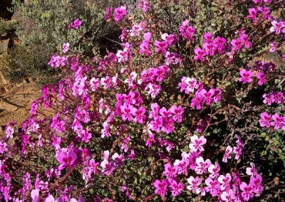 gatsrivier-flora-40
