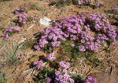 gatsrivier-flora-43