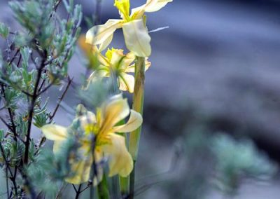 gatsrivier-flora-45