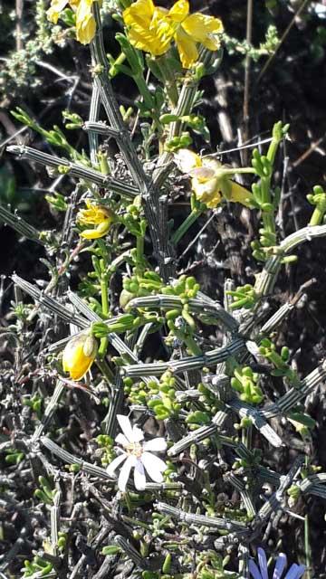 gatsrivier-flora-51