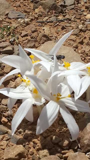 gatsrivier-flora-52