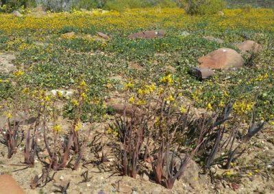 gatsrivier-flora-80