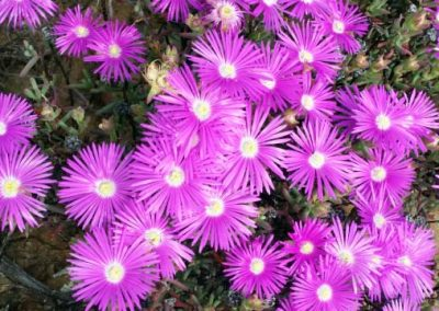 gatsrivier-flora-82