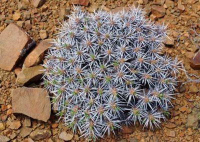 gatsrivier-flora-85