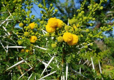 gatsrivier-flora-91